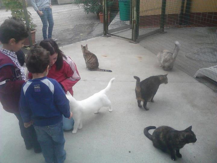 Resoconto Raccolta Aiuti Gattile Mondo Gatto Lealtà Azione
