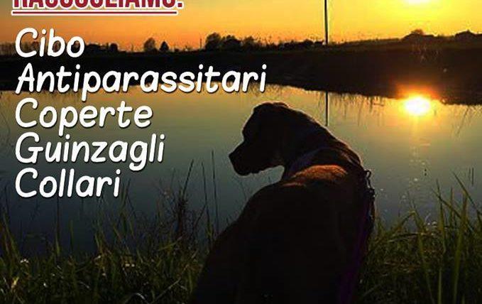 ldz_stalli